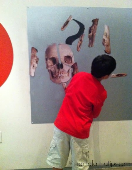 Kid's activities in the Skull Exhibition at the California Academy of Sciences
