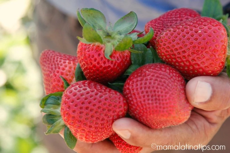 A bunch of strawberries - mamalatinatips.com