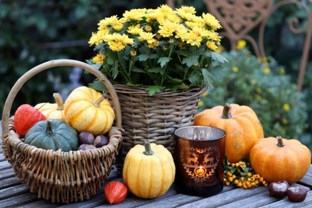 Zo maak je jouw tuin klaar voor de herfst