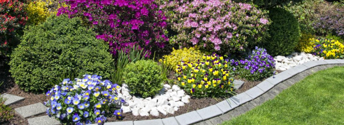 Zo krijg je de mooiste bloemen in de tuin