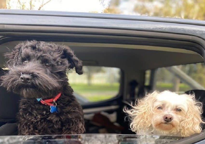 Swab Dogs on Instagram