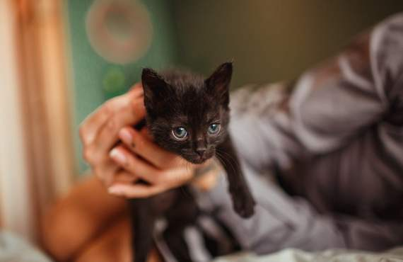 Top tips for families adopting a kitten