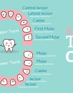 also baby teeth chart what order do they come in mama natural rh mamanatural