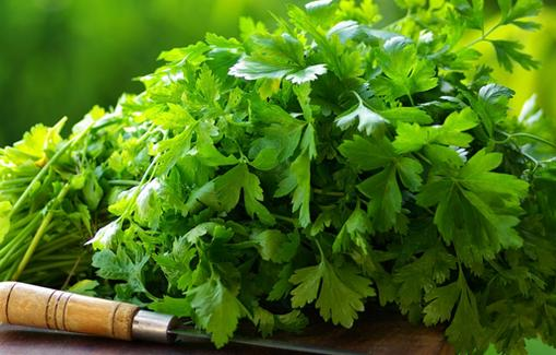 Coriander's health benefits