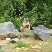 Idée sortie : Le parc animalier de Sainte Croix (Moselle)