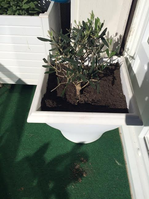 olivier-floraqueen