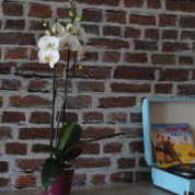 Offrir des fleurs, c'est toujours une bonne idée avec Interflora ! ( concours de la fête des mères)