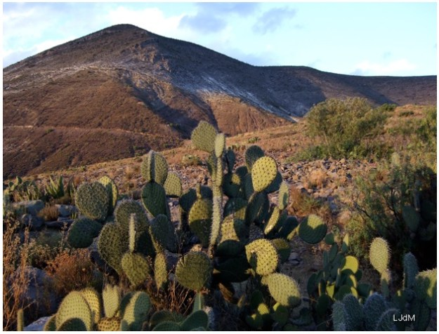 desert_Mexique
