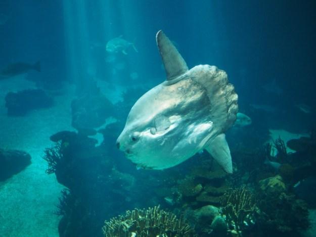 aquarium lisbonne
