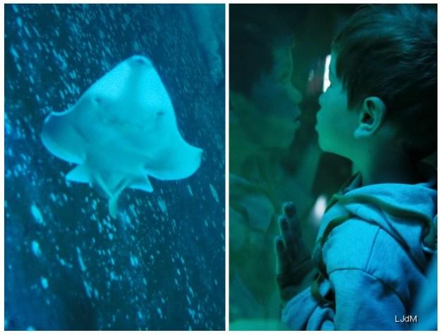 requins4