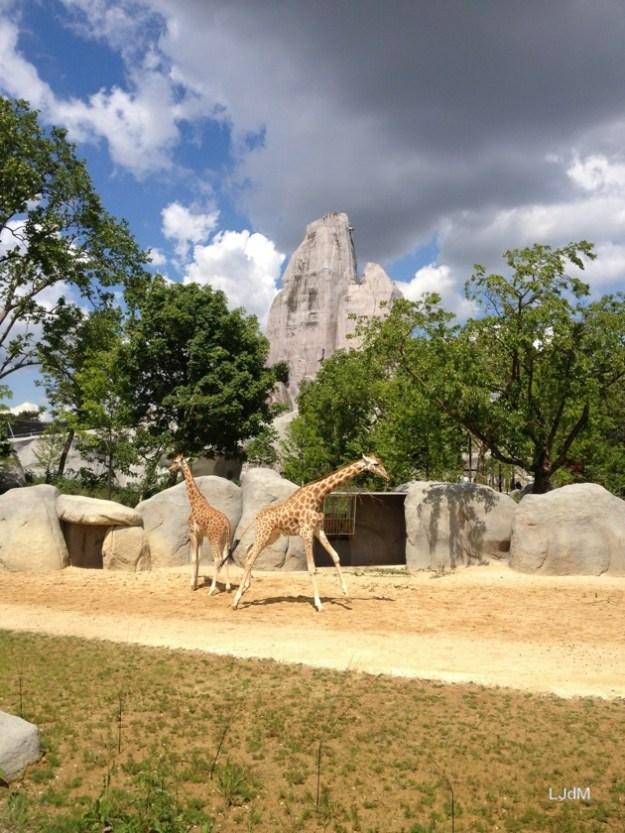 Au zoo de Vincennes