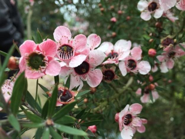 fleurs à Roscoff