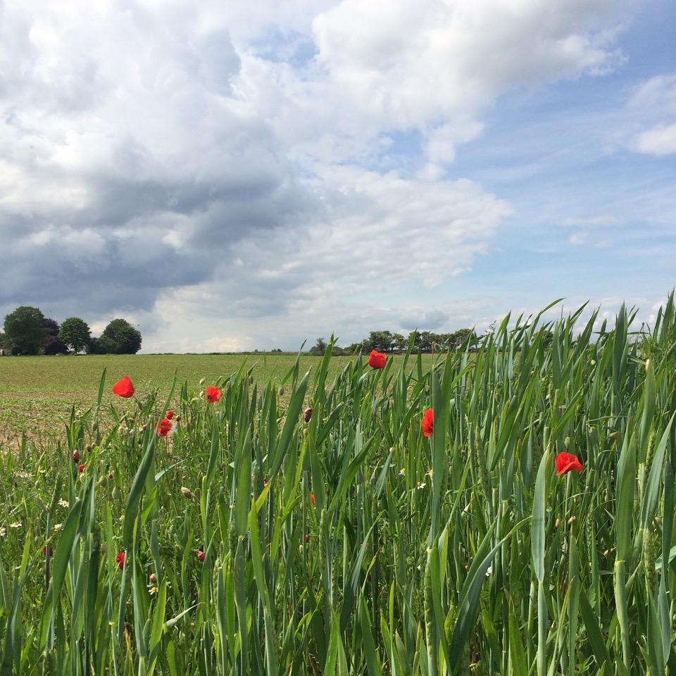 champs de bataille Waterloo