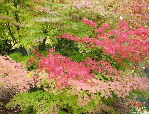 automne au potager des princes