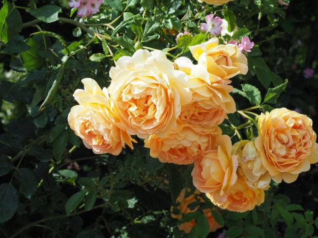 roseraie Terra Botanica
