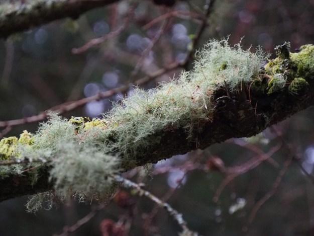New Forest en hiver