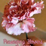 Preserving Flowers Easily and Affordably