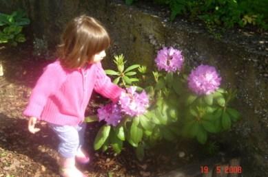 rododendron dete