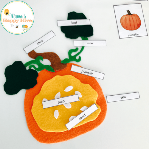 pumpkin seed diagram 2001 f150 wiring diy felt parts and life cycle with printables
