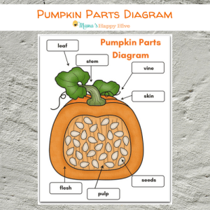 DIY Felt Pumpkin Parts and Life Cycle with Printables