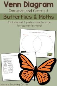 Moths and Butterflies Venn Diagram Worksheet