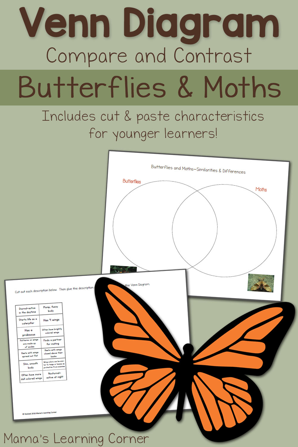 how to make a venn diagram what is the definition of moths and butterflies worksheet - mamas learning corner