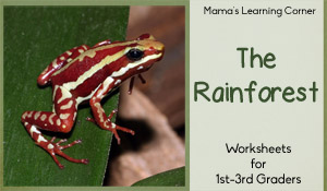 Rainforest Worksheet Packet for 1st-3rd Graders