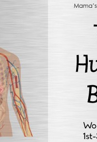 The Human Body Worksheet Packet for 1st-3rd Graders