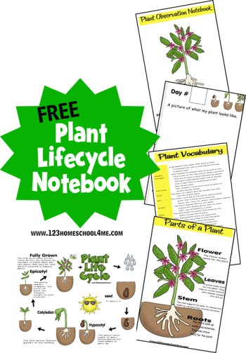 Plant Life Cycle Notebook