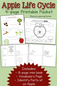 Free 4-page set of Apple Life Cycle Worksheets: includes 8-page mini-book, vocabulary page, and Parts of an Apple cut & paste activity