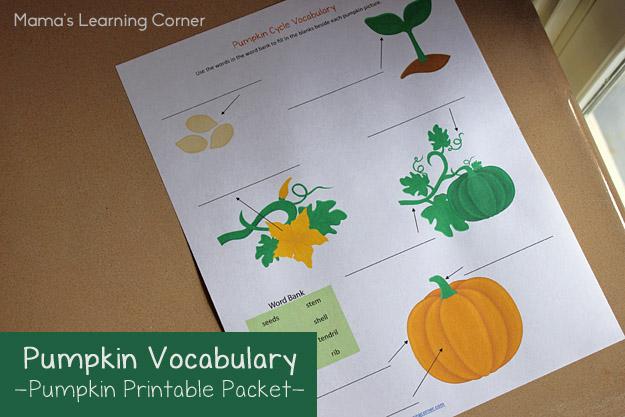 Pumpkin Life Cycle Vocabulary Worksheet
