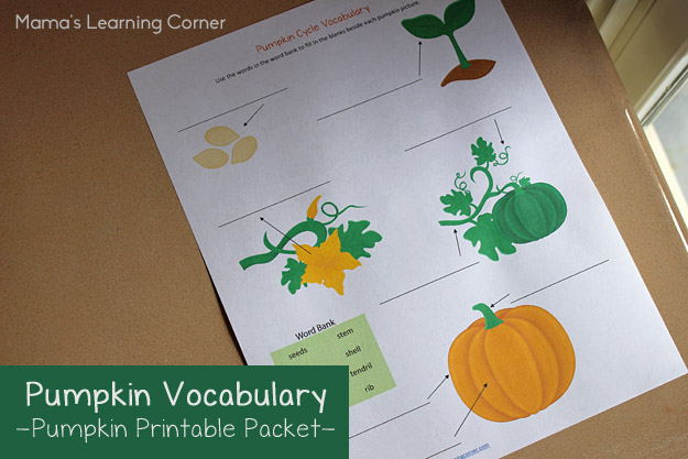 Pumpkin Life Cycle Vocabulary Worksheet