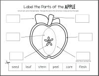 Apple Life Cycle Printable Packet - Mamas Learning Corner