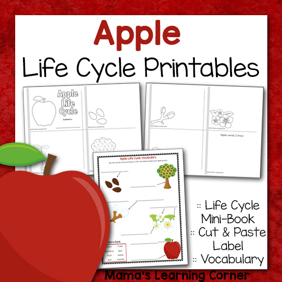 graphic about Parts of an Apple Printable titled Apple Lifestyle Cycle Printable Packet