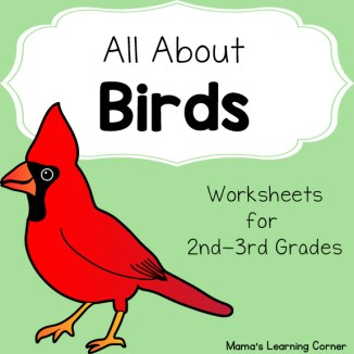 All About Birds Worksheets