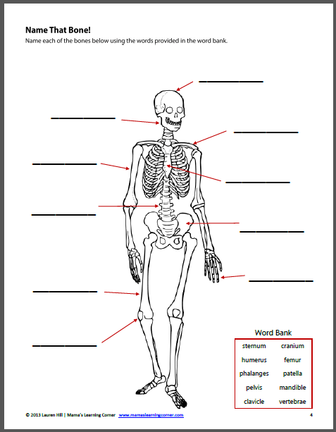 Free 2nd Grade Science Worksheets For The Bones Of. Free