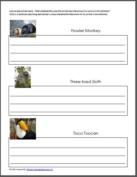 Rainforest Worksheets