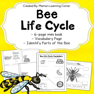 Bee Life Cycle Worksheets
