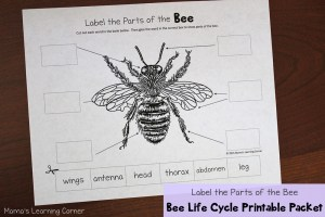 Bee Life Cycle Worksheets  Mamas Learning Corner
