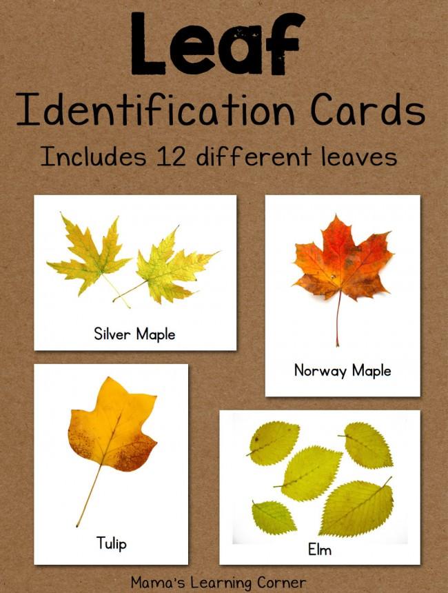 Leaf Identification Cards