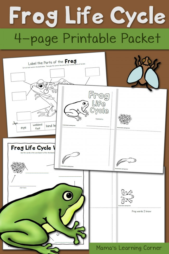 Frog Life Cycle Worksheets