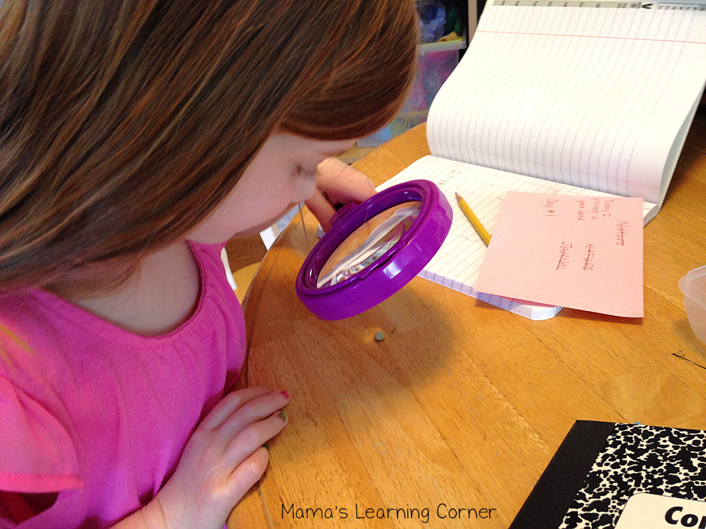 Studying Fruits and Vegetables: Observing Seeds