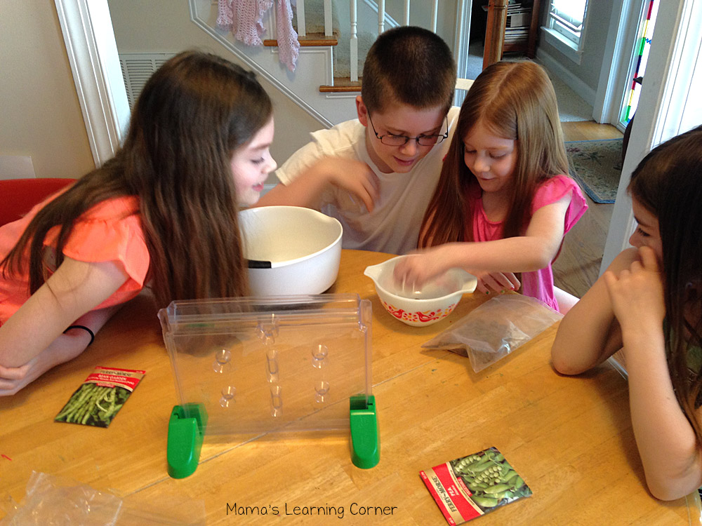 Studying Fruits and Vegetables: Seed Kit