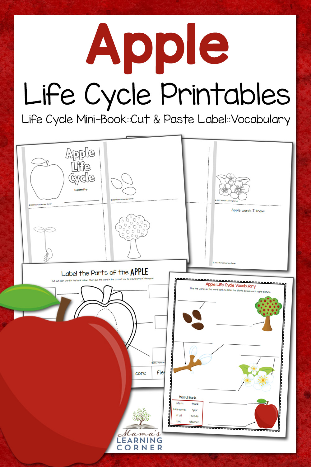 photo regarding Parts of an Apple Printable named Apple Daily life Cycle Worksheets - Mamas Understanding Corner