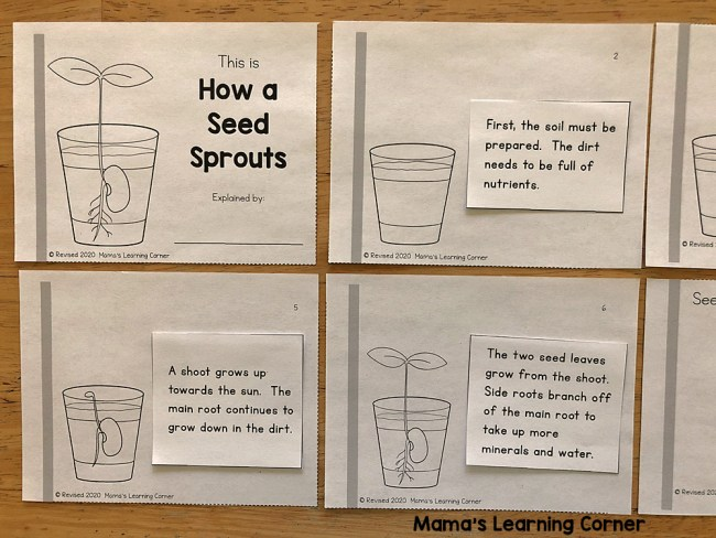 How a Seed Sprouts Booklet Cut and Paste Text