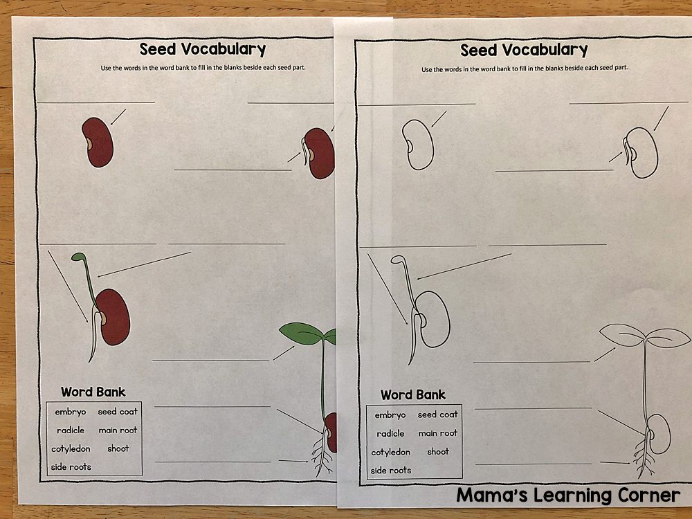 Seed Vocabulary Worksheet