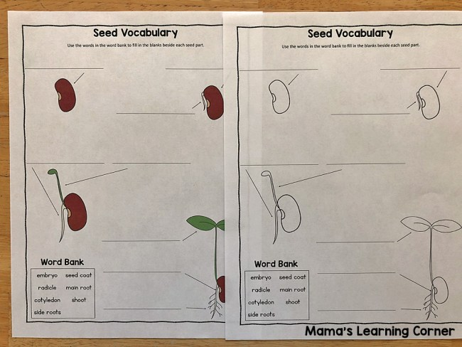 Seed Vocabulary Worksheet