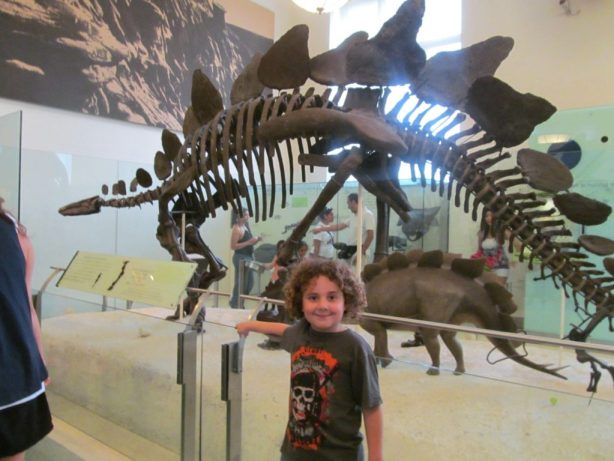 natural history nyc museum