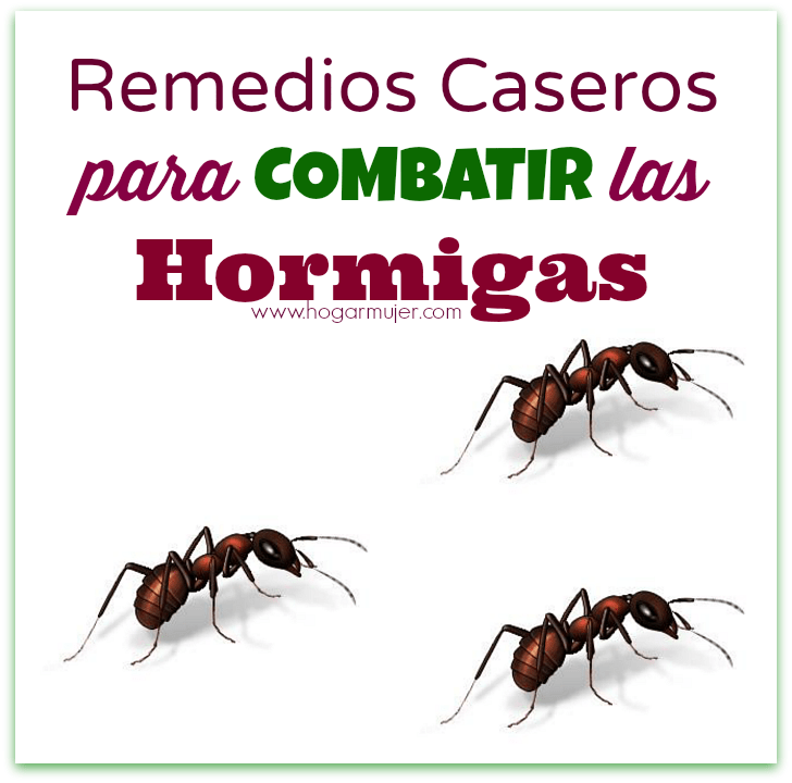 Remedios caseros para combatir las hormigas - Casa de hormigas ...