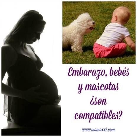 embarazoymascotas